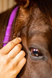 Vetemotion Tierfachärztin Sabine Brasche Akupunktur 3X3A2303