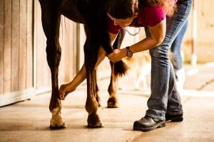 Vetemotion Tierfachärztin Sabine Brasche Akupunktur 3X3A2346