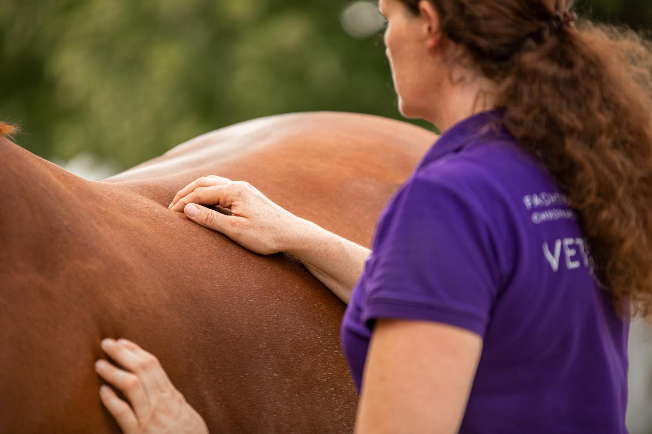Vetemotion Tierfachärztin Sabine Brasche Akupunktur 3X3A2822